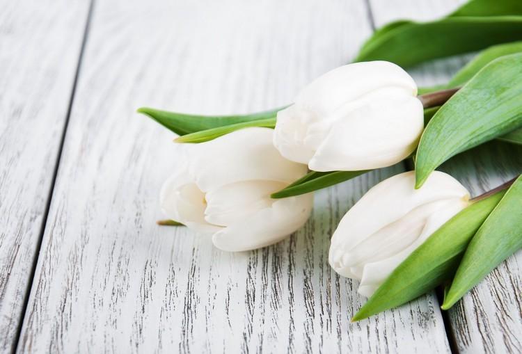 Condolencias - Sra. Isabel Gili
