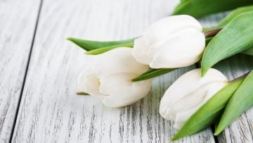 Condolencias - Sra. mamá de nuestro compañero Federico Meinke