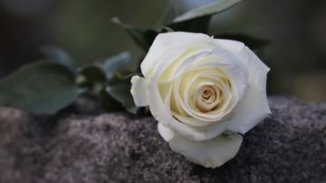 Condolencias: Hilda Emilce Fliguer Milman