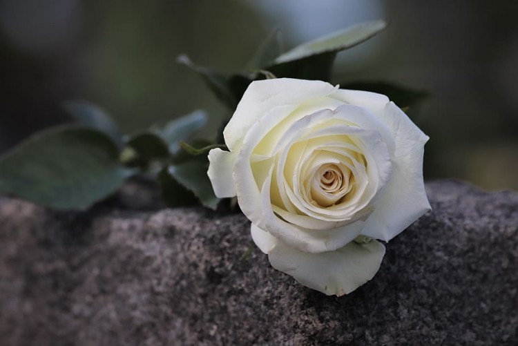 Condolencias - Mirtha Markman
